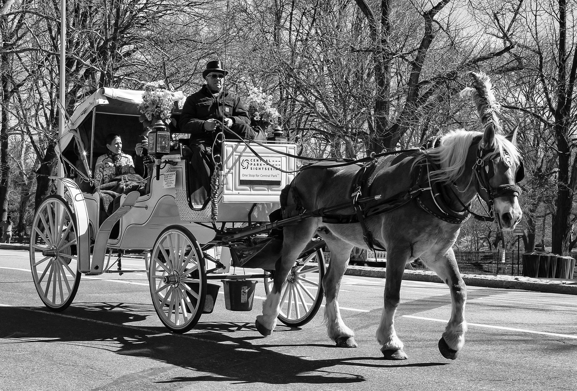 lovaskocsizás New Yorkban